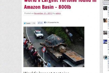 Информация о крупнейшей в мире черепахе оказалась ложной. Фото: скриншот/News-hound.net