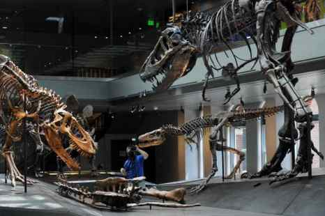 Зал динозавров постоянной экспозиции в музее естественной истории Лос-Анджелеса. Фото: ROBYN BECK/AFP/Getty Images