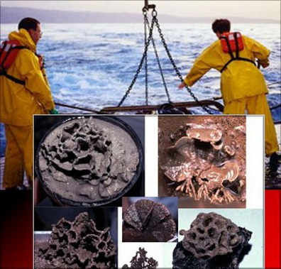 На дне Марианской впадины обнаружены живые существа. Фото с сайта scrippsnews.ucsd.edu