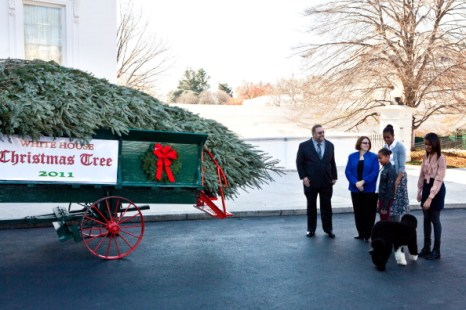 Рождественская елка прибыла в Белый дом. Фоторепортаж из Вашингтона. Фото: Brendan Hoffman /NICHOLAS KAMM/AFP/Getty Images