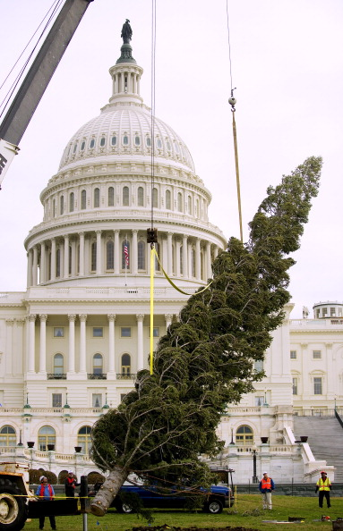 Рождественская елка установлена у Капитолия США. Фоторепортаж из Вашингтона. Фото: JIM WATSON/AFP/Getty Images