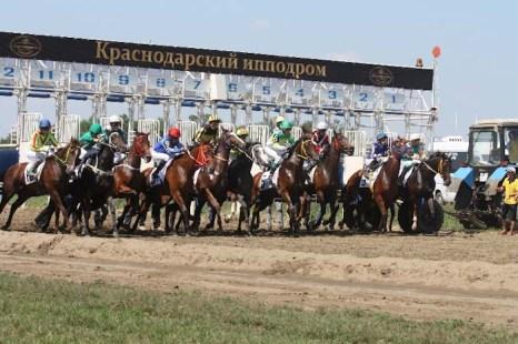 Краснодарский ипподром. Фото: Наталья Будычева