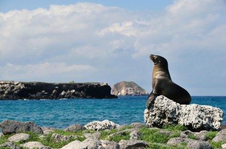 Круиз по Галапагосским островам. Фото: John MacIlwinen/Photos.com