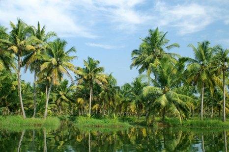 Керала — одна из наиболее популярных среди туристов частей Индии. Фото: Mikhail  Nekrasov/Photos.com