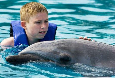Купание с дельфином. Фото: PAUL J. RICHARDS/AFP/GettyImages