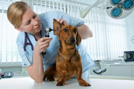 Приучать к походам в ветеринарную клинику питомца нужно с самого нежного возраста, иначе проблем будет гораздо больше. Фото: Alexander Raths/Photos.com
