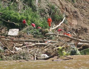 На месте схождения оползней продолжаются спастельные работы. Фото: GABRIEL LOPES/AFP/Getty Images