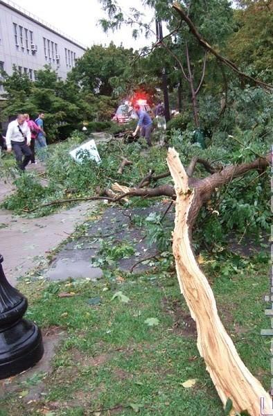 Ураган в  Нью-Йорке.  За рулем автомобиля погибла женщина, 30-летняя Алина Левакис, жительница Пенсильвании. Фото с сайта epochtimes.com