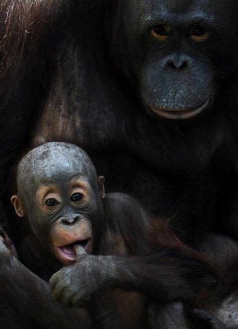 Фото: ANDREY SMIRNOV/AFP/GettyImages