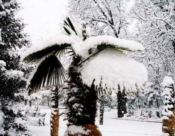 В Южную Америку пришли сибирские морозы. Фото с сайта gezlev.ru