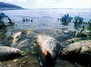 Исчезновение видов животных и растений угрожает существованию миллионов людей. Фото с сайта zonalife.ru