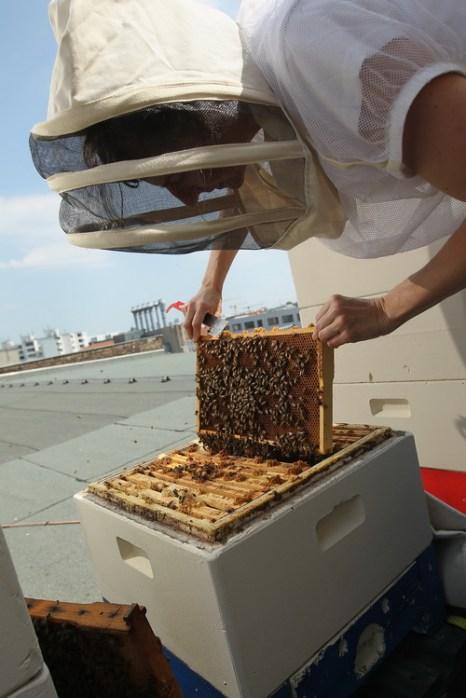 Пчёлы учат справедливости. Фото: Sean Gallup/Getty Images