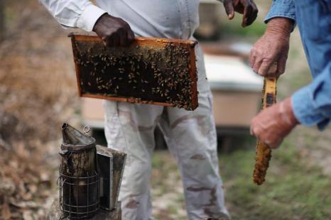 Пасечники проверили ульи после зимы во Флориде (США). Фото: Joe Raedle / Getty Images