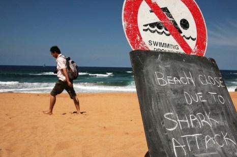 Мужчина идет по пляжу, который закрыт после нападения акулы на сёрфера в 2009 году в Сиднее, Австралия. Правительство принимает меры, чтобы избавить отдыхающих от нападений, устанавливая ловушки, которые будут убивать акул вдали от берега. Фото: Ian Waldie/Getty Images
