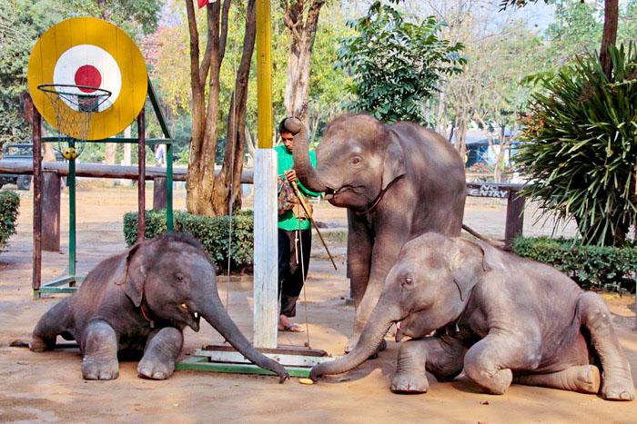 Представление со слонятами. Фото: Николай Карпов/Великая Эпоха (The Epoch Times)