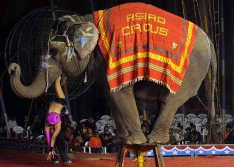 Индия планирует исключить цирковые номера с животными. Фото: NARINDER NANU/AFP/Getty Images