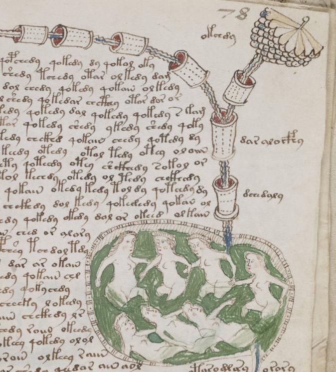 Фрагменты рукописи Войнича. Фото: WikimediaCommons