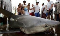 Бразилия, пляжи, акулы, туристы