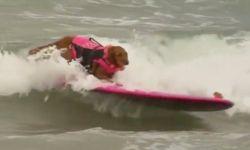 Соревнования по собачьему серфингу прошли на пляже в Калифорнии