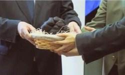 В Венгрии нашли самый крупный за всю историю страны трюфель
