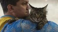 Владельцы кошек в Киеве продают своих питомцев, чтобы помочь армии