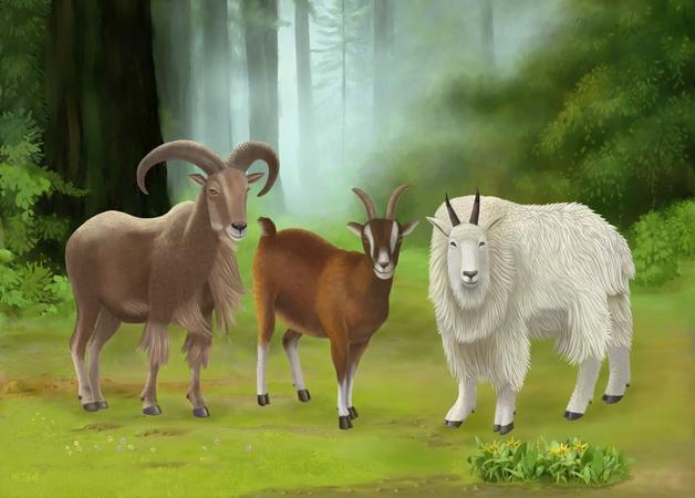 год козы, рождённые в год козы, характер