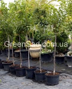 http://greensad.com.ua/