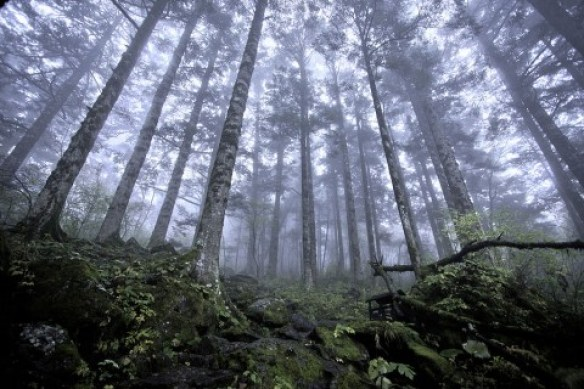 Shennongjia_virgin_forest-480x320