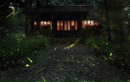 Firefly-Nanjing-Linggu-Temple-13-600x380