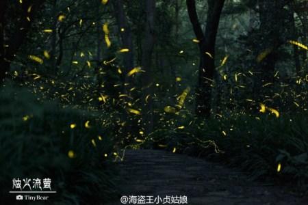 Firefly-Nanjing-Linggu-Temple-3-600x400