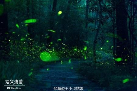 Firefly-Nanjing-Linggu-Temple-600x400
