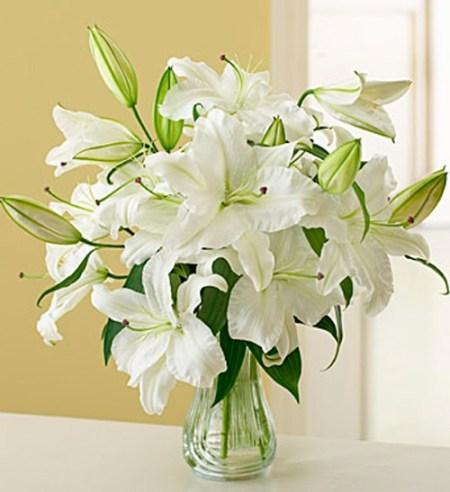 Белые лилии. Фото: tsvetem.ru