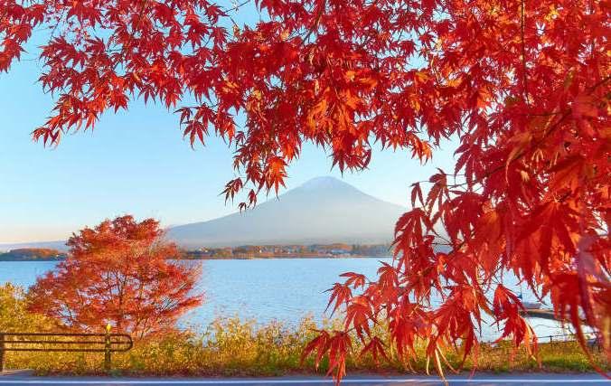 осень, прогулки, ходьба
