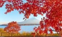 супер лекарство от гриппа придумали в Японии