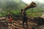 Вырубка лесов в заповеднике Фэнтунчжай.