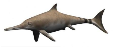 морские чудовища. Древние виды ихтиозавров