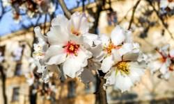 В цветущий Крым поезжайте