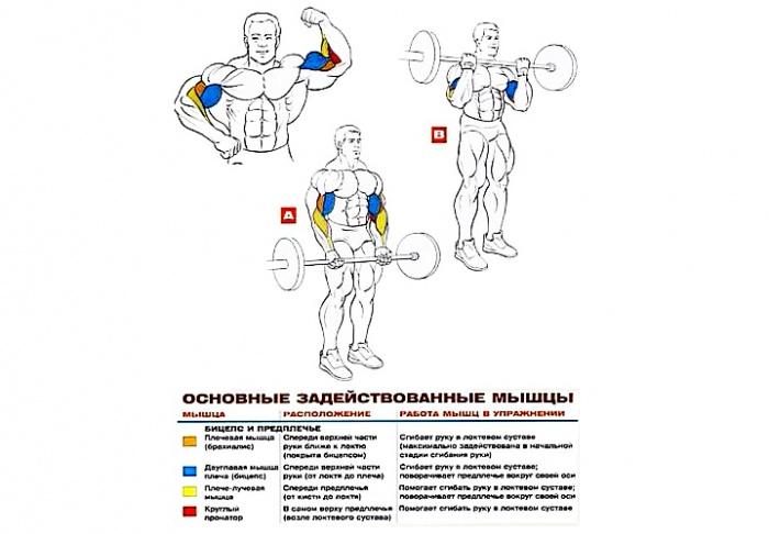 Фото: sportwiki.to/Подъем_штанги_на_бицепс