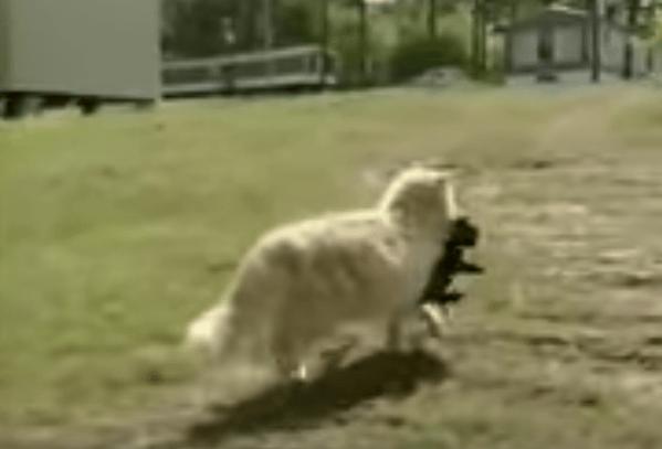 щенки, кошка, молоко, собака