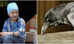 девочка, вороны, птицы
