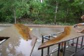 Acid Stained Counter Tops