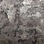Exotic Concrete Finishes by DCCFY