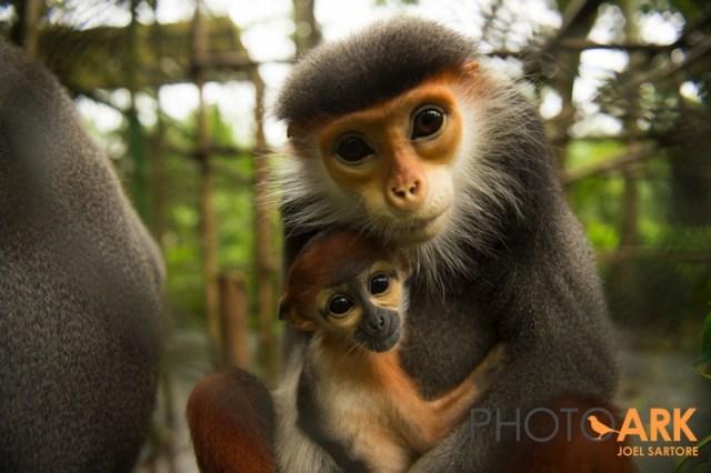 Primates in vietnam