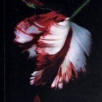 Yeniay / Stephenie Meyer