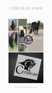 Abstract Horse Head Logo for Quarter Horse Breeding Facility is Stunningly Realistic