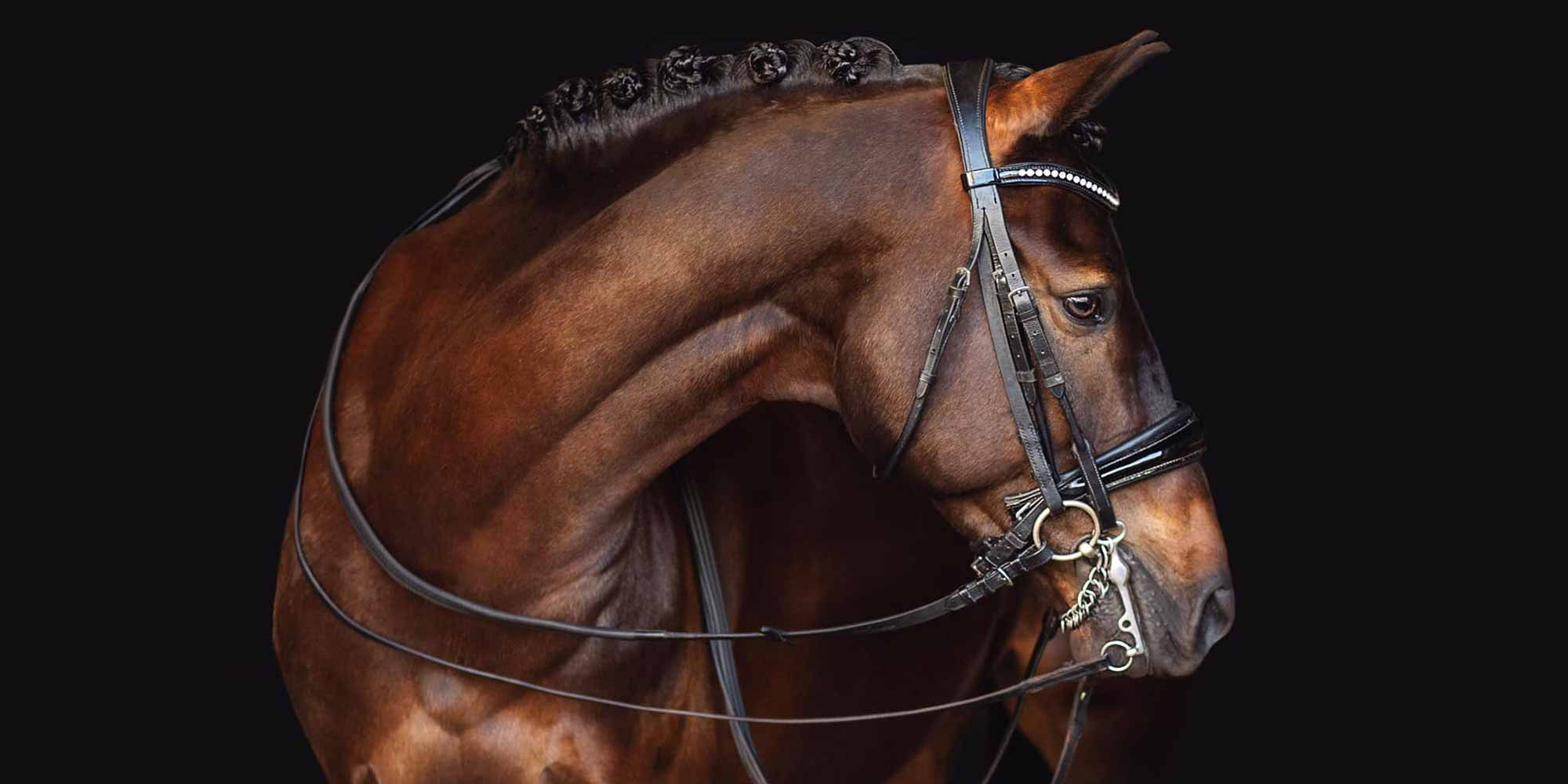 EQ Graphics | Sport Horse Photography Head Shot with Black Background