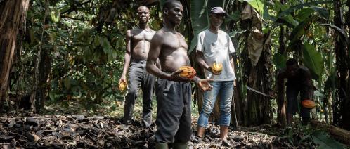 Sur le chemin des fèves de cacao en Côte d'Ivoire