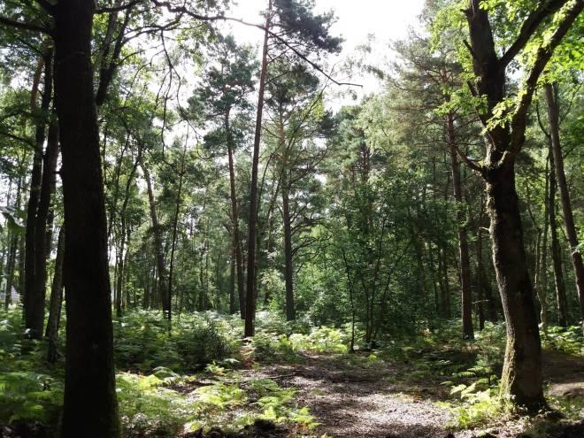 Forêt de Maurepas dans les Yvelines