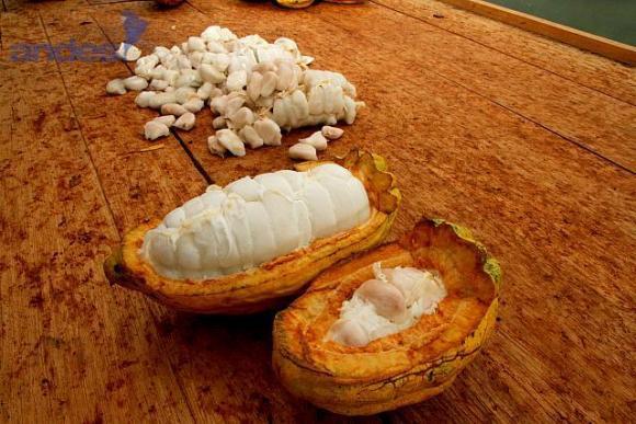 chocolat d'Equateur 5