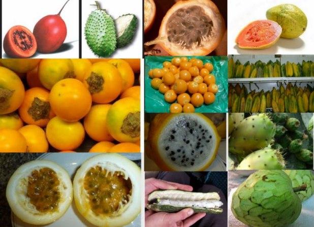 fruits exotiques d'Equateur